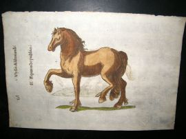 Aldrovandi 1642 Antique Hand Colored Print. Horses